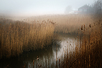 Reed Bed
